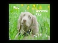 Kerstin - Ich Liebe Hunde (Feat. Inke) zooskool.com