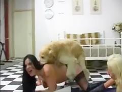 Tasting dogs cum