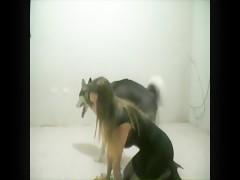 Miss f teasing a horny husky